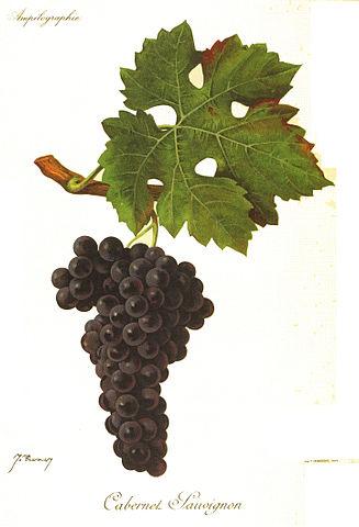Cabernet Sauvignon fruit and leaves